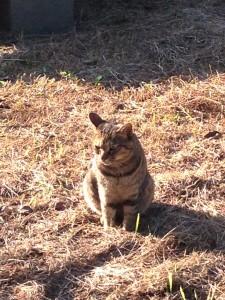 葛西臨海公園猫3