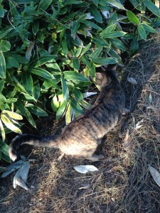 葛西臨海公園猫4