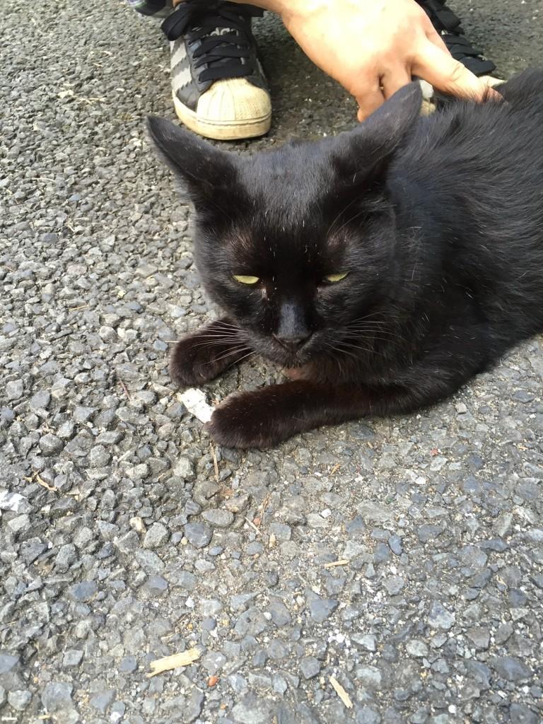 月島黒猫4