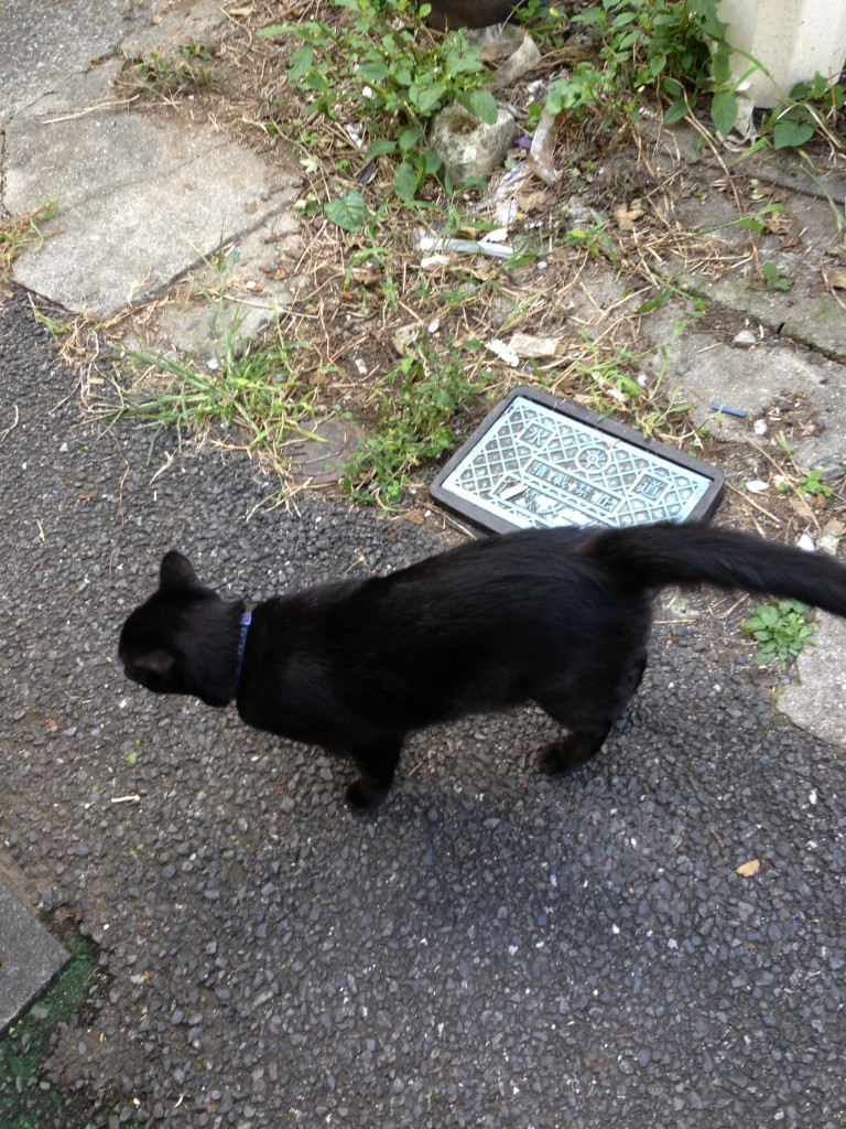 月島黒猫2014