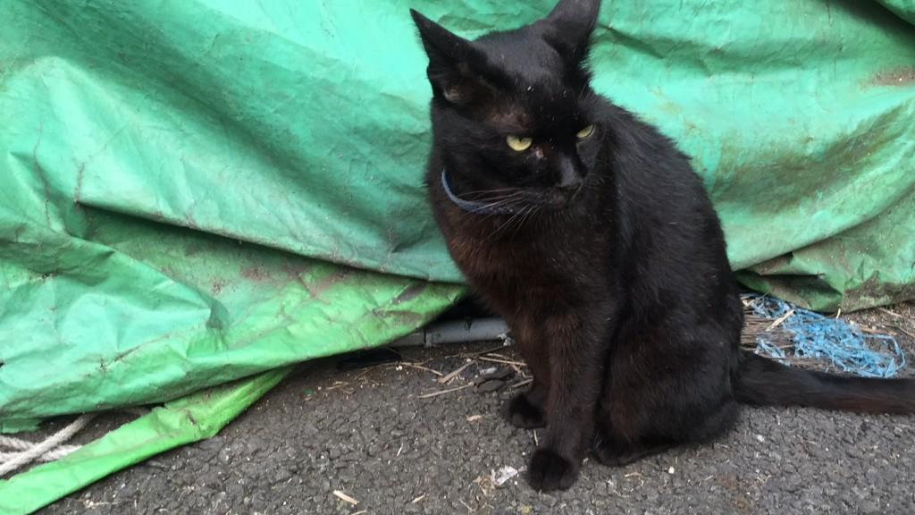 月島黒猫3