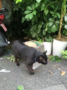 月島黒猫1